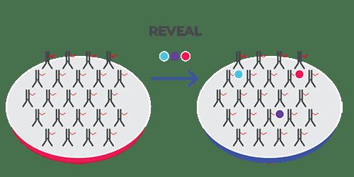 CODEX reveal step